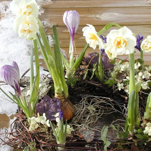 Forår4